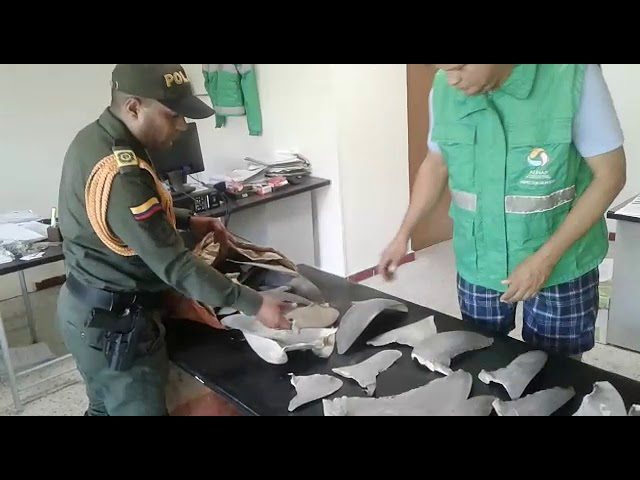 En Santa Marta autoridades incautaron 48 aletas de tiburón