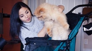 My Cats Review Pet Stroller