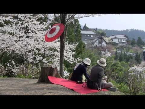 2014.4・吉野山の桜(Mt. Yoshino,Cherry Blossom)(奈良県吉野町)