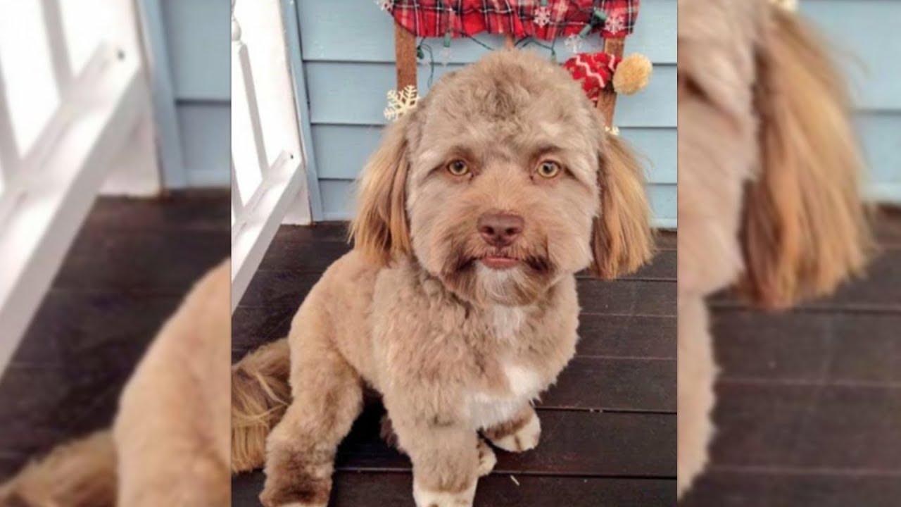 Hund Sieht Aus Wie Mensch