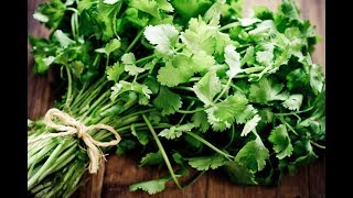 How To Keep Coriander Leaves Fresh For Up to 15 Days Kitchen Tips تازه نگهداشتن گشنیز تا مدت زیاد