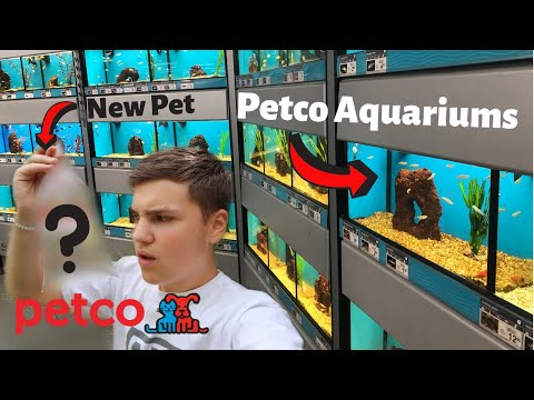 ALL THE FISH AT PETCO (Petco Fish Tour)