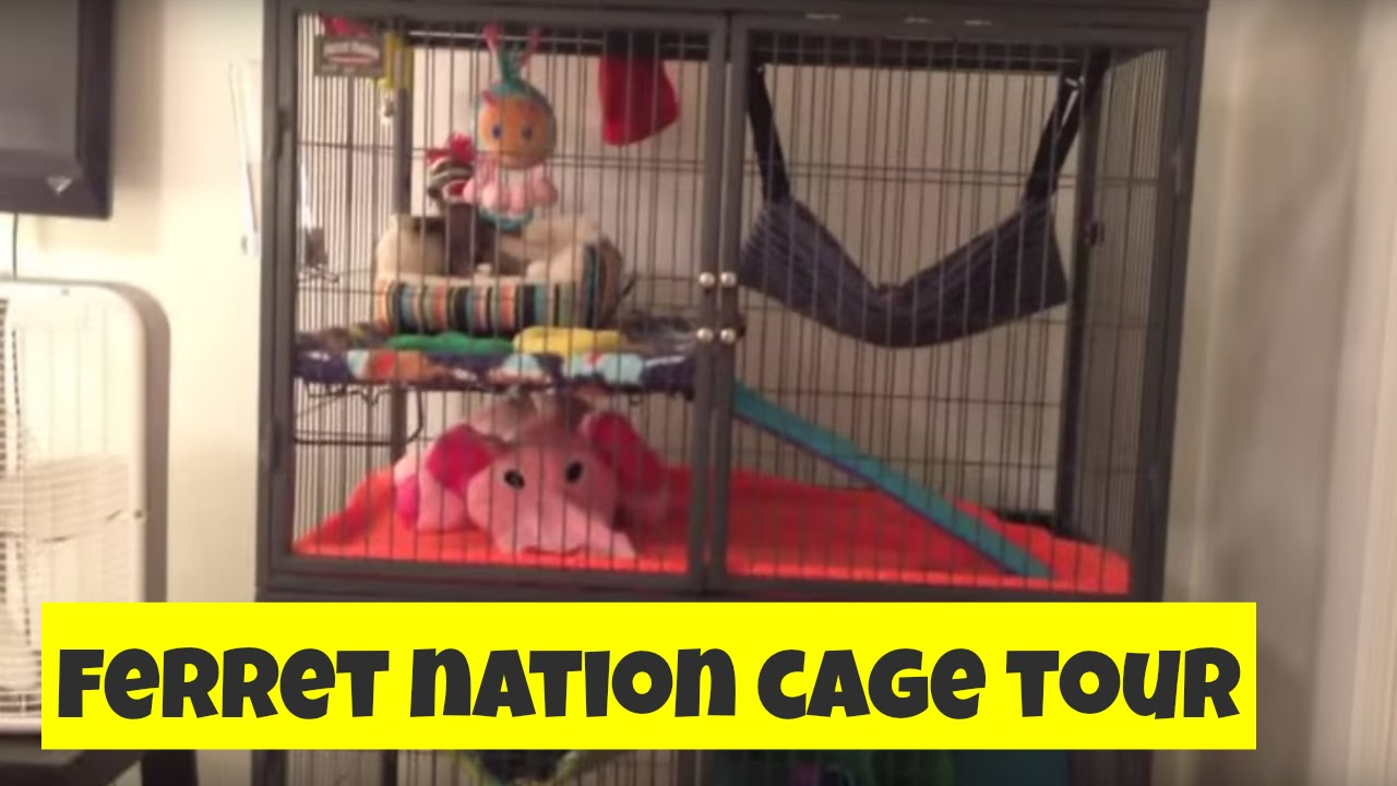 Ferret Cage Tour 🏡 Ferret Nation 182 Double Unit