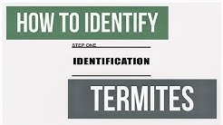 How to Inspect and Identify Termite Species