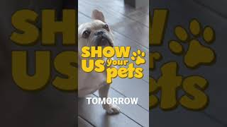 Show Us Your Pets! 💝 Matthew Lawrence and Cheryl Burke Teaser
