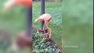 Steppy Boi #350