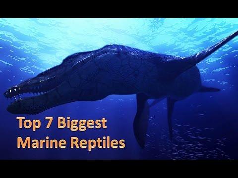 Top 7 biggest marine reptiles