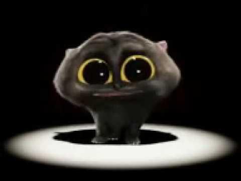 Черный кот поёт видео