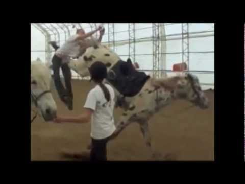 Why Idiots Should Kept Away From Horses