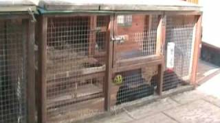 Introduction to rabbits and CottonTails Rescue in the UK
