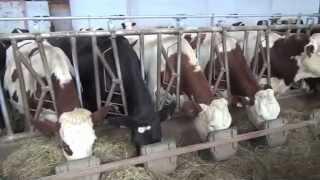 Les éleveurs ont testé #7 : des auges individuelles au cornadis