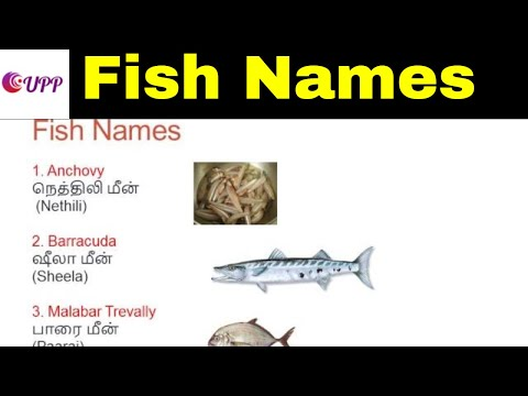 Learn Tamil Through English - Fish Names With Images