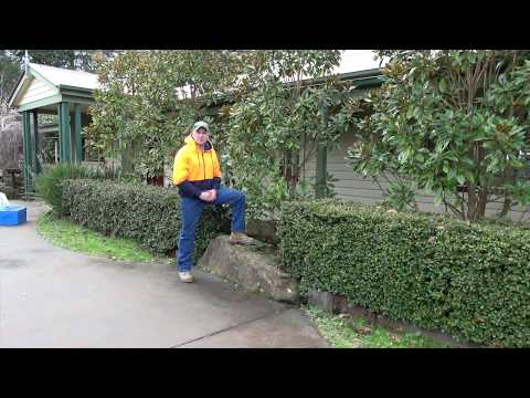Little Gem Magnolia Pruning Advice By Jindabyne Nursery Monbulk