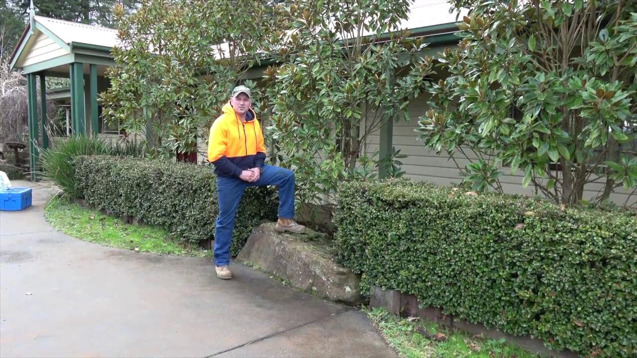 Little Gem Magnolia Pruning Advice By Jindabyne Nursery Monbulk