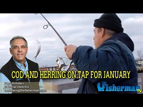 January 2, 2020 Long Island Metro Fishing Report With Fred Golofaro