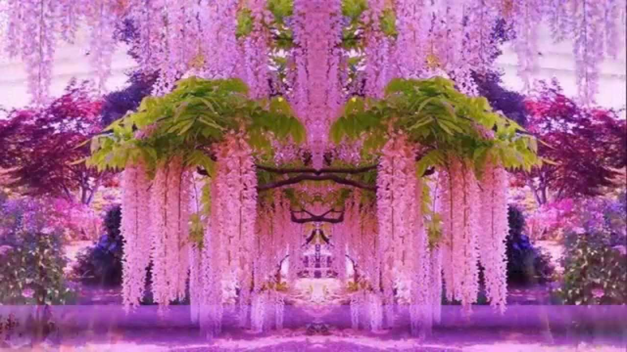 Fall Trees Wallpaper Magnificent Colors Of Wisteria Hd1080p Youtube