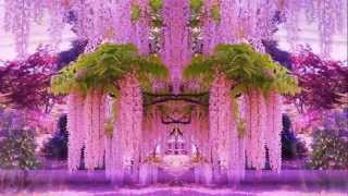 Magnificent Colors of Wisteria (HD1080p)