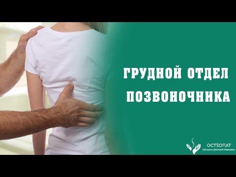 Грудной отдел позвоночника- область между лопатками. Боли в спине, протрузии, сколиоз и кифоз.