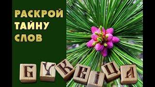 ключ к управлению реальностью - древнеславянская буквица. посадим кедры вместе!