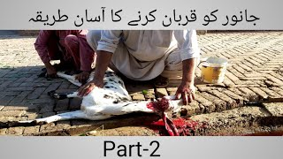 An Easy Way To Slaughter And Skin A Goat . Part-2