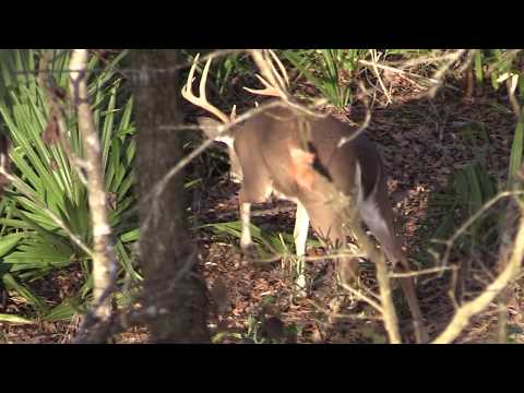 Mississippi River Deer Hunting