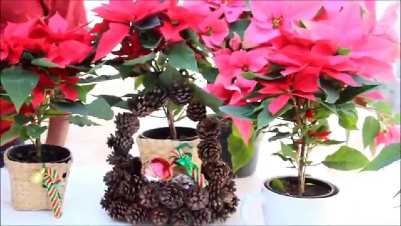 Arreglos navide os con flor de nochebuena em11 youtube - Arreglos navidenos para mesa ...