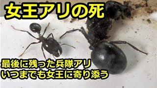 増えすぎて拡張部屋に引っ越すアリと最後に残ったアリ