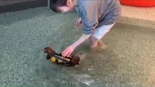 강아지 수영장 강아지 구명조끼 개 수영