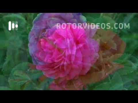 Download Jason Derulo - Swalla (feat. Nicki Minaj & Ty Dolla $ign) (Official Music Video)