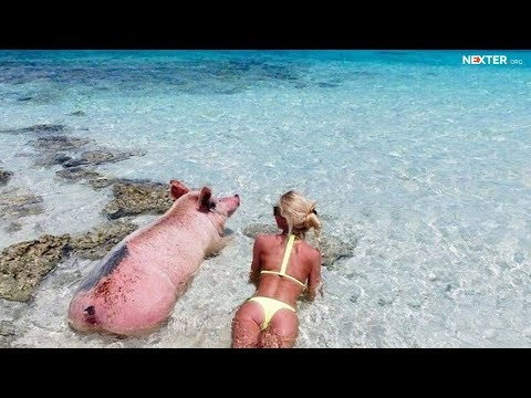 Most extraordinary beaches around the world: mirrors, pigs, airplanes and unicorns!