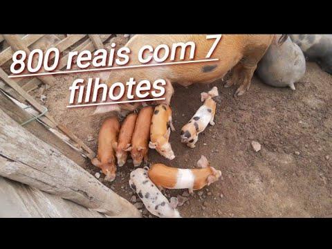 #03 FEIRA DE PORCOS DE CACHOEIRINHA /PE!! DIA 16/01/2020