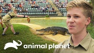 robert-irwin-primera-demostracin-alimentando-cocodrilos-los-irwin-animal-planet