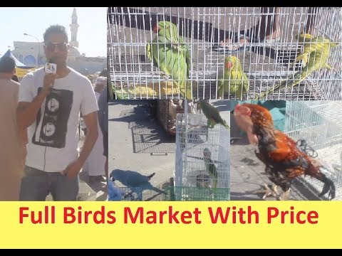 Friday Birds Market - Muscat OMAN
