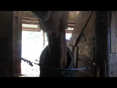 Funny Talking Horse! Check It Out!!