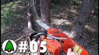 Wycinka drzew! Zaczynamy 🪓!   Działka w lesie 🌲   Odcinek 05
