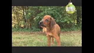 RHODESIAN - ABC CANINO - 101 DOGS - ESPAÑOL