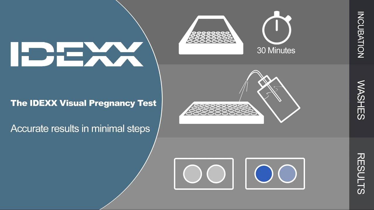 Idexx Visual Pregnancy Test Youtube
