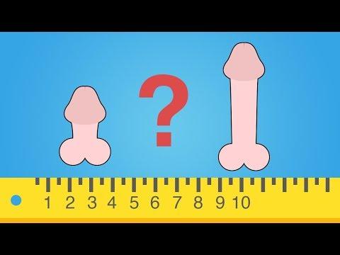Wie wichtig ist die Größe des Penis?