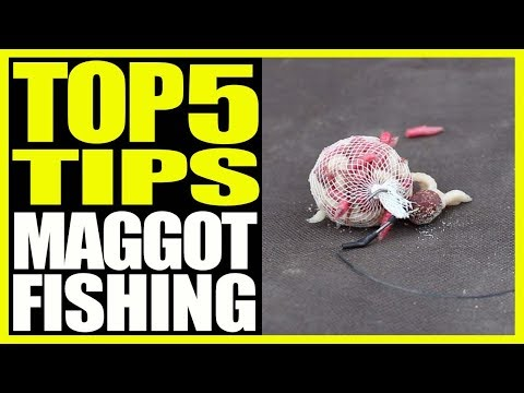 CARP FISHING - Maggot Fishing Tips