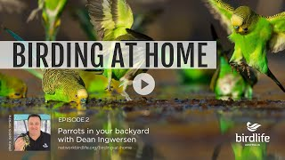 Birding At Home Episode 2: Parrots In Your Backyard With Dean Ingwersen