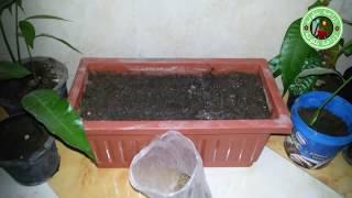 تعلم الاكتفاء الذاتي . طريقة زراعة الجرجير في المنزل بطريقة سهلة و بسيطة  (1)