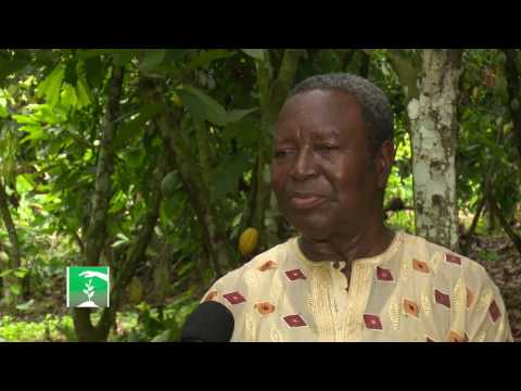 FARMERS MARKET: DWINDLING FORTUNES OF NIGERIA'S COCOA