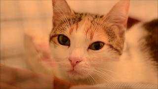 WHO IS CAT FINDIK? CUTE CALICO CAT