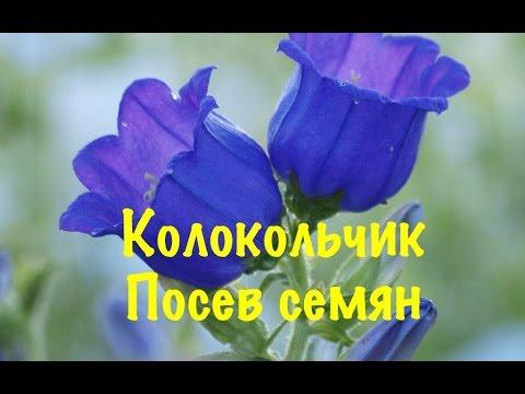 ГИДРОГЕЛЬ (АКВАГРУНТ) для комнатных растенийиз YouTube · Длительность: 9 мин3 с  · Просмотры: более 26.000 · отправлено: 30.01.2017 · кем отправлено: Комнатные растения