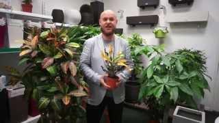 ARTPLANTS - декоративно-лиственные растения