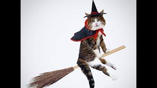 Сказочно смешные кошки! Подборка приколов с котами, кошками и котятами