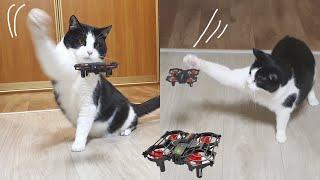 Survival Skills. Cat VS Drone