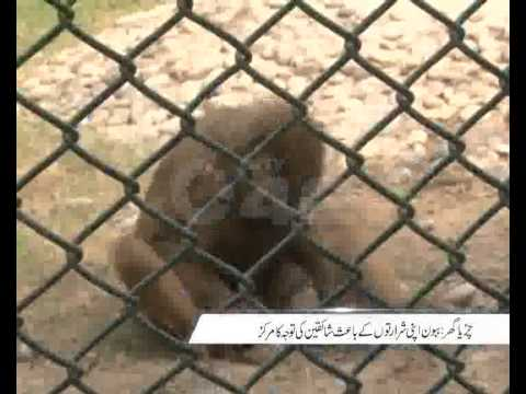 Lahore Zoo Monkey Pkg By Tazeen Malik City42 Travel Video