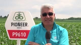 CORTEVA AGRISCIENCE™ -  Открит ден в с. Караисен - нови  хибриди царевица и слънчоглед