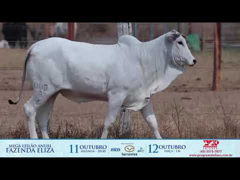 LOTE 144